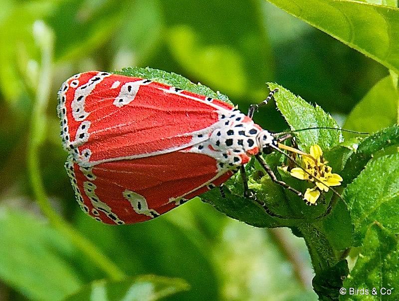 Les papillons de martinique - Images de papillon ...