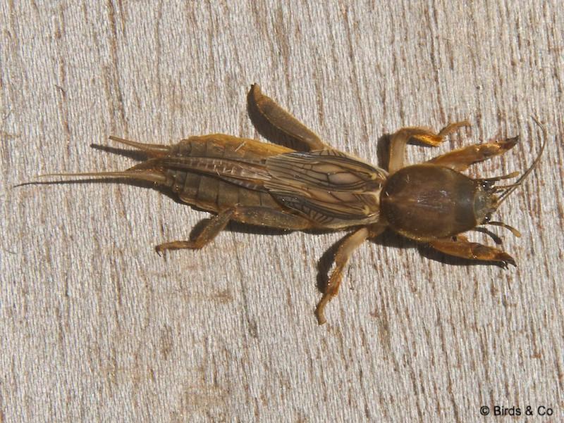 Les Insectes de Martinique